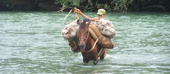 Horse Crossing River